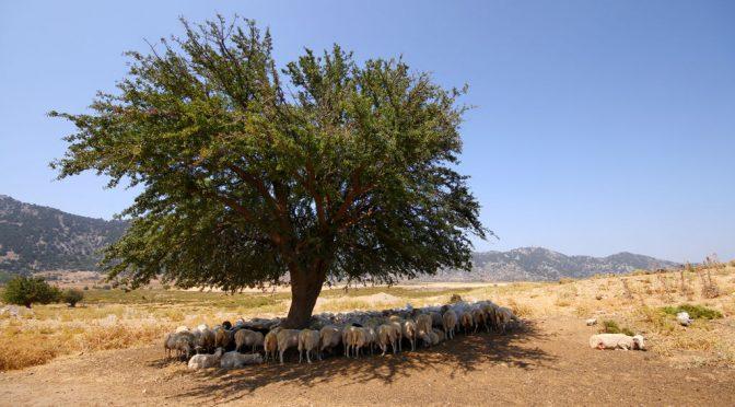 Torah Ecology: Yitro 2018 (Ex. 18:1 – 20:23)